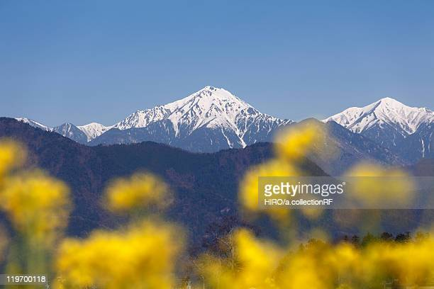 Mount Jonen and Oilseed Rape Blossoms