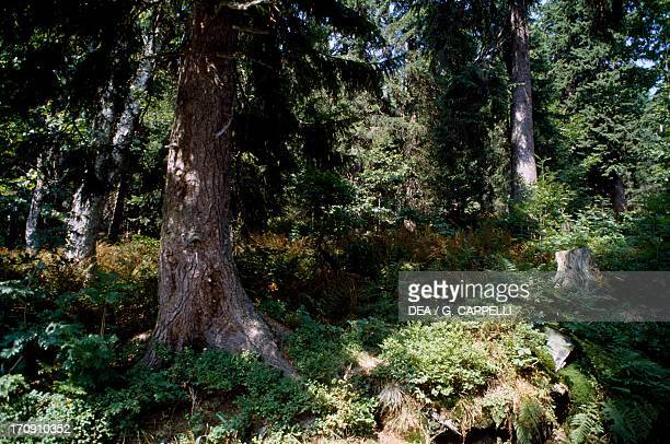 Mount Lusen Bavarian Forest National Park Bavaria Germany