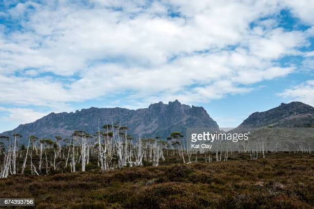 Mount Ossa on the Overland Track