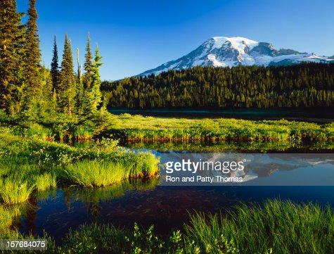 Mount. Rainier National Park