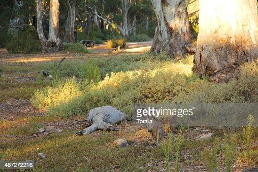 Mount Remarkable National Park South Australia Stock Photo Thinkstock