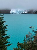 A view from the trees onto Mount Robson glacier, behind a cloud of fog across the Berg Lake.