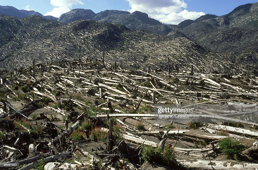 mount st. helens nat. volcanic monument.: 10 yrs after eruption : Stock Photo