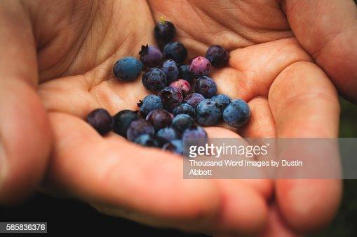 Mountain Blueberries