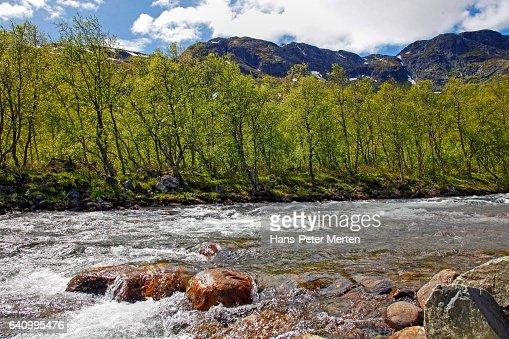 Mountain brook at Hemsedalsfjella, Sogn og Fjordane, Norway