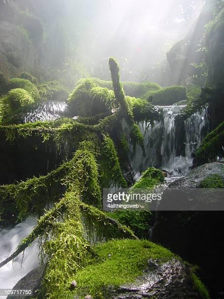 Mountain Creek mit Moos und Nebel