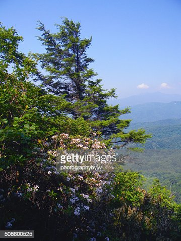 Mountain flower view : Foto de stock