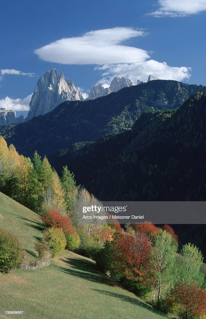 Mountain forest in the Dolomites in autumn, South Tyrol, Italy