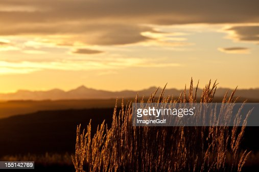 Mountain Grass Backlit in the Rockies