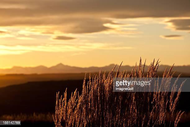 Mountain Gras beleuchteten in den Rocky Mountains