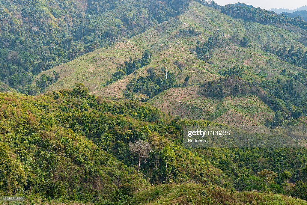Mountain in north of thailand. : Stock Photo