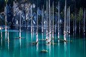 Mountain Lake Kaindy with sticking birch, Almaty, Kazakhstan