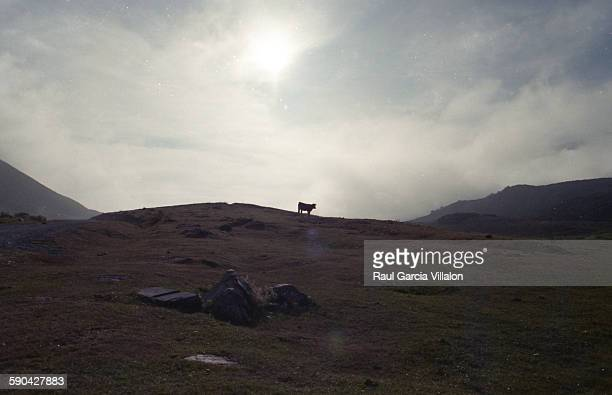 Mountain landscape and cow silhouette