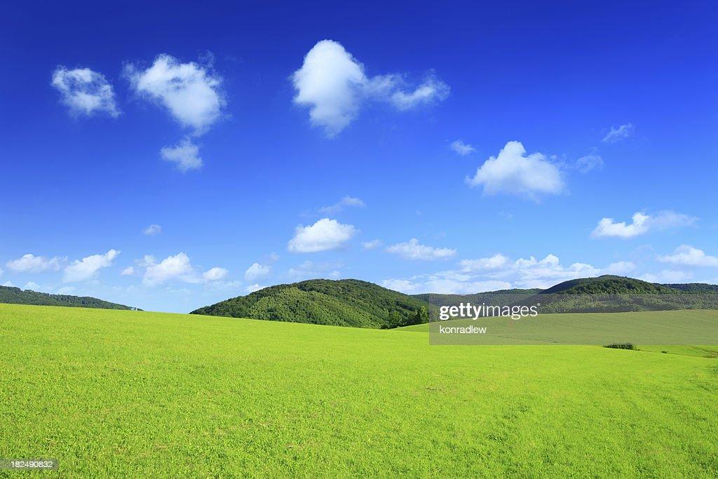 Mountain landscape - green field XXXL
