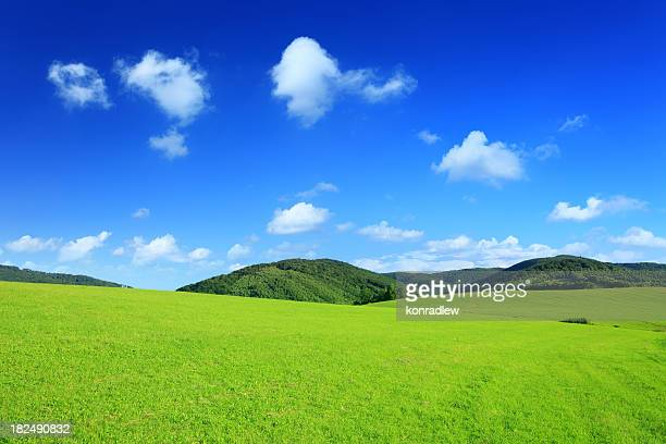 Mountain landscape - green field XXXL