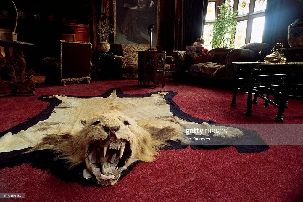 Mountain Lion Skin Rug : Stock Photo