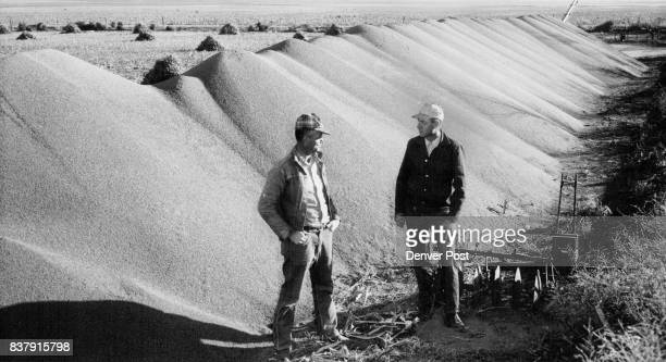 Mountain of Milo In Kansas Max Williams and Jute Blanchett of Dodge City Kan stand beside a mountain of newly harvested milo the grain is being...