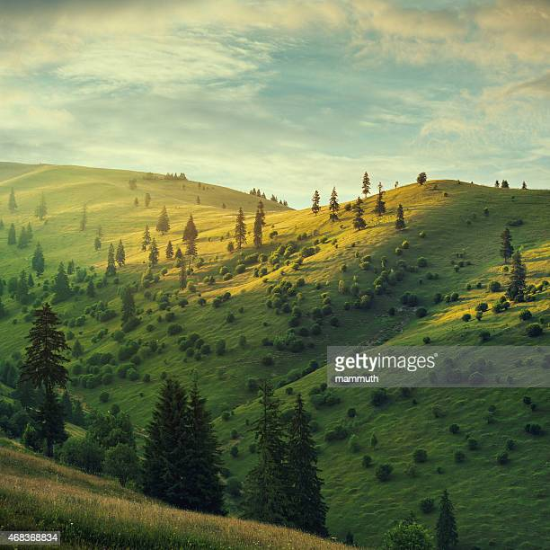 mountain pasture at sunset