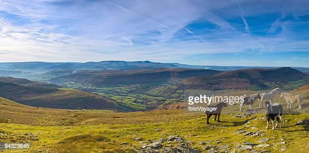 Mountain ponies, green valleys, blue horizon