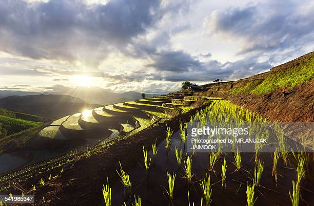Mountain rice field at Chiang Mai, Thailand