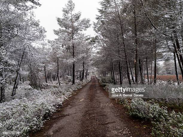 Mountain road of red earth in a snowy forest