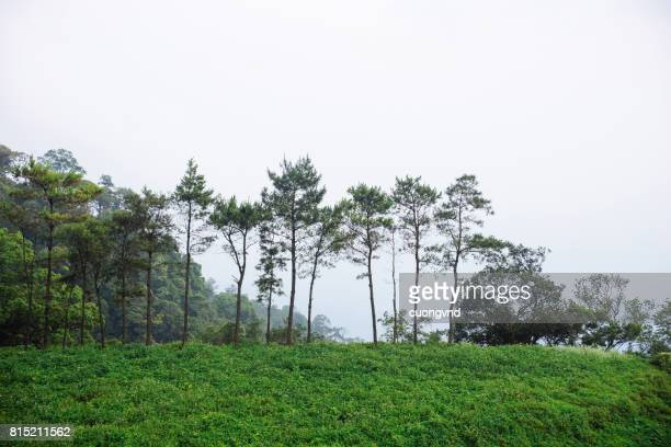 Mountain scenery with fog in Tam Dao, Vinh Phuc, Vietnam