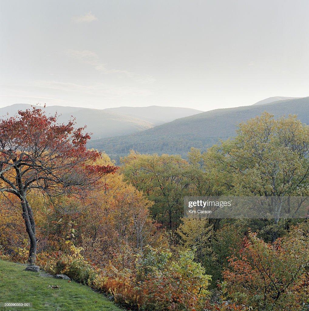 Mountain scenic, autumn
