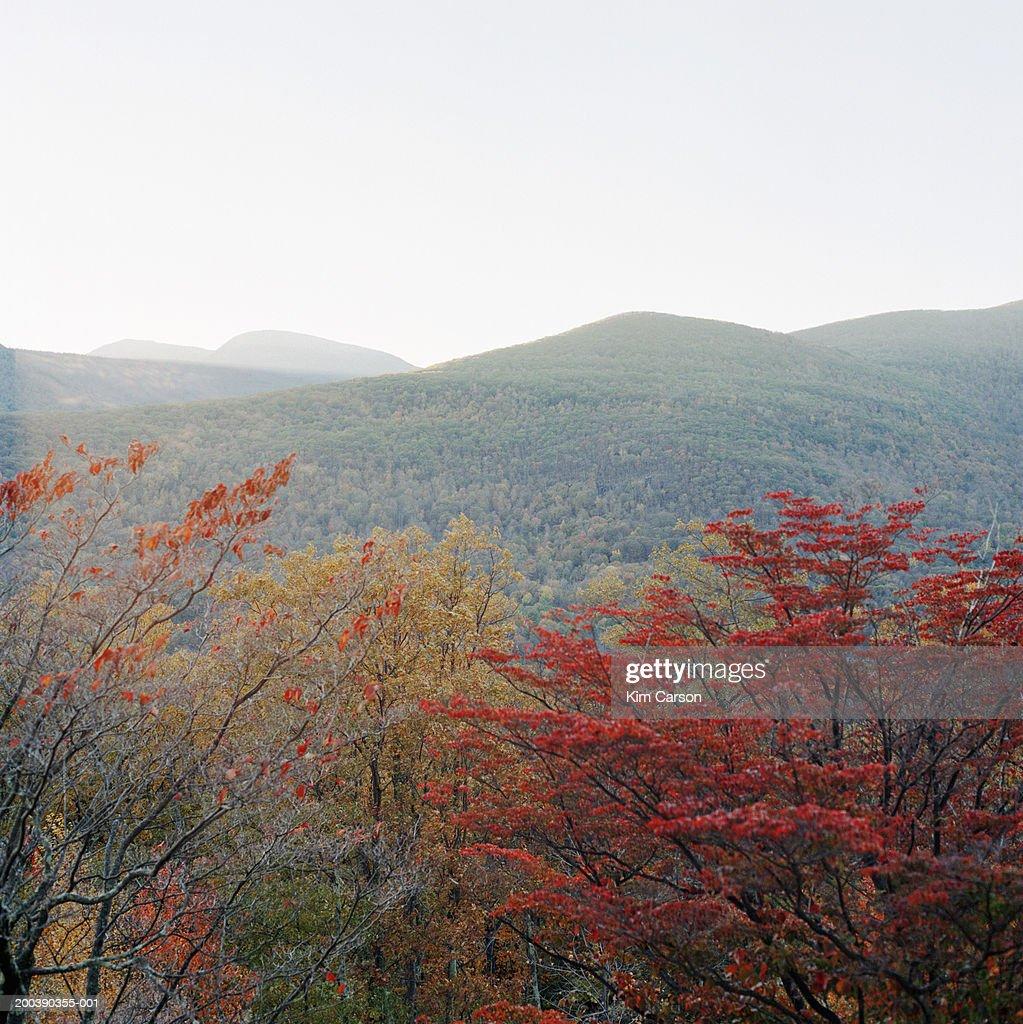 Mountain scenic, sunset, autumn