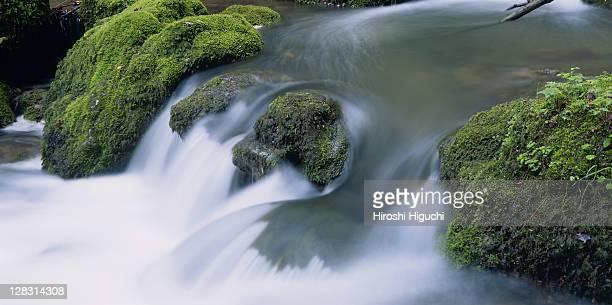 Mountain stream flowing over mossy rocks, Baselland region, Switzerland