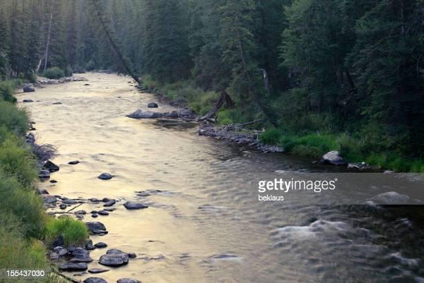 Mountain Stream in Colorado