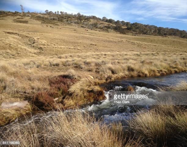 Mountain stream near Kiandra, NSW