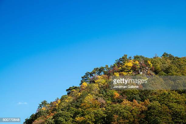 Mountain topped with autumnal colour trees
