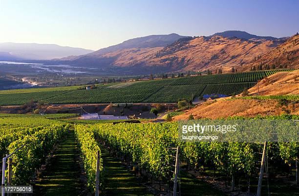 Mountain view of Okanagan valley from winery vineyard
