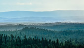 Mountain view over forest