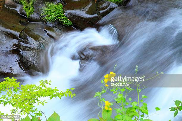 Mountain water stream