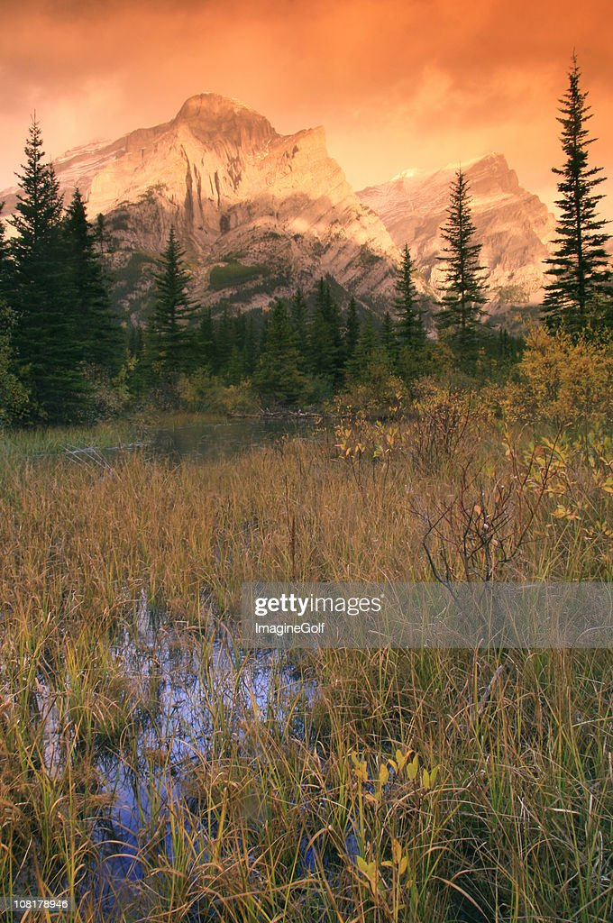 Mountain Wilderness and Field