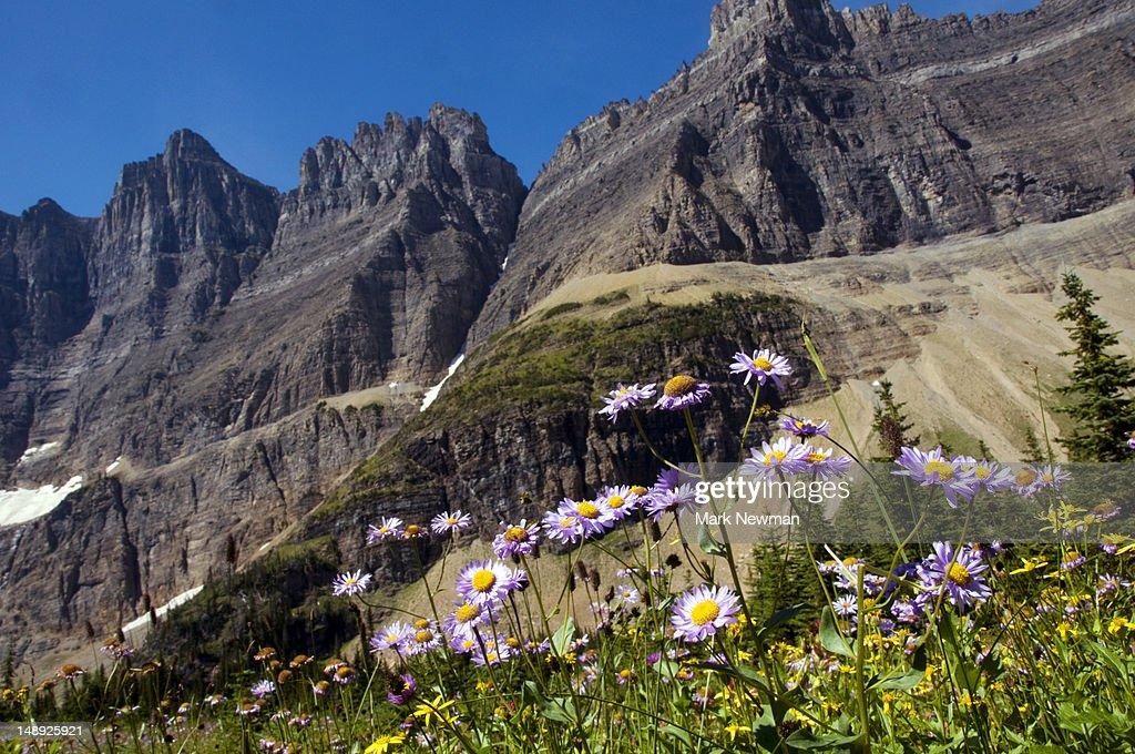 Mountain wildflowers.