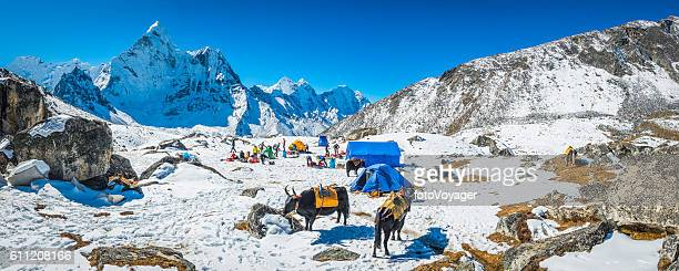 Mountaineers yaks snowy base camp beneath Ama Dablam Himalayas Nepal
