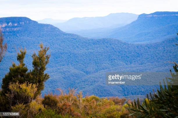 Mountains covered with blue haze vaporising from eucalyptus trees
