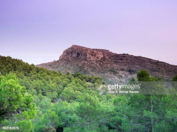 Mountains covered with pine forest with the top of a rocky peak with twilight blue sunset light