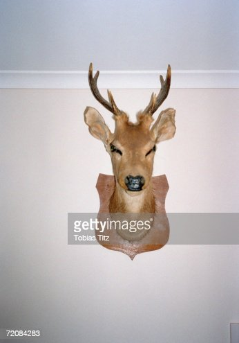 Mounted deer's head on wall