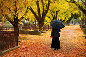 A lone woman in mourning in a cemetery in fall (autumn), dressed in black and carrying a black umbrella and a red flower. The central path of the cemetery is covered with orange leaves and the surroun