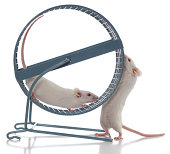 White Mouse Boss Always Wants Exercise Wheel to Spin Faster