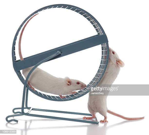 Mouse Boss Always Wants Exercise Wheel to Spin Faster