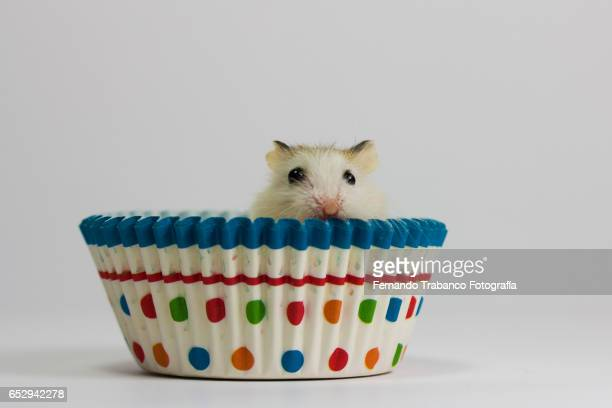 Mouse eats a cupcake