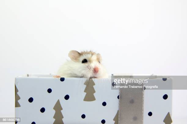 mouse in a gift box
