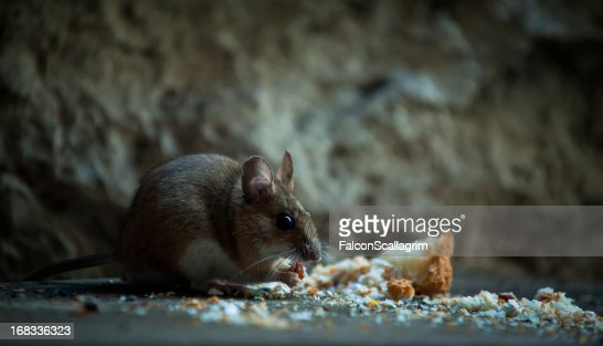 Mouse in basement
