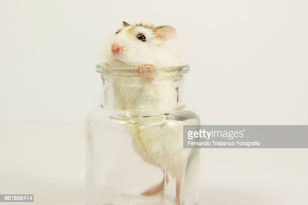 mouse inside a glass jar