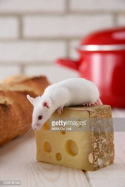 A mouse on top of cheese