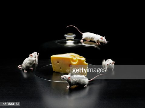 Mouse : Stock Photo